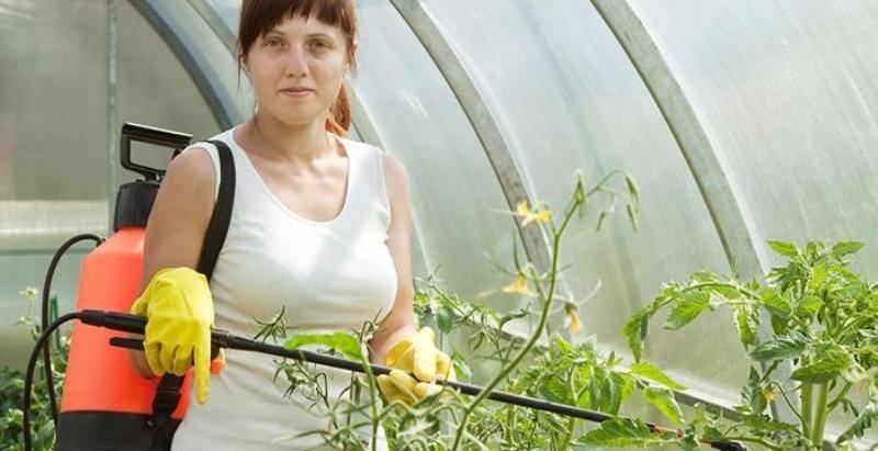 Медный купорос: применение в садоводстве и на огороде от болезней, правила обработки растений