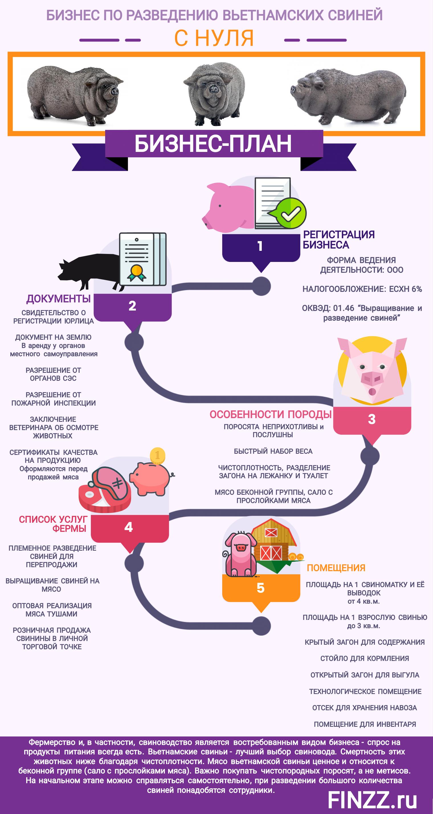 ᐉ свиноводство как бизнес: с чего начать, бизнес-план, рентабельность - zooon.ru