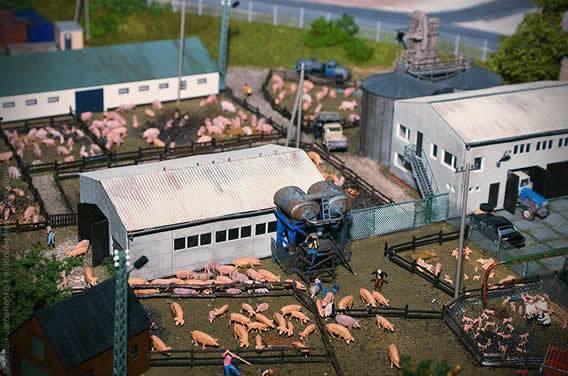 Как сделать свиноферму самостоятельно