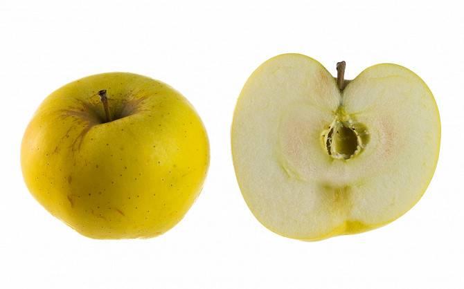 Сортовая характеристика яблони гренни смит - дневник садовода flowersdi.ru