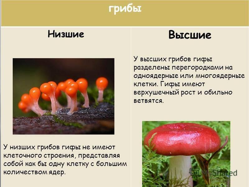 Недооцененный потенциал грибов