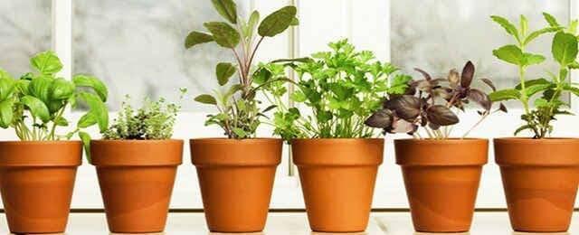 Выращивание зелени на подоконнике зимой простым способом
