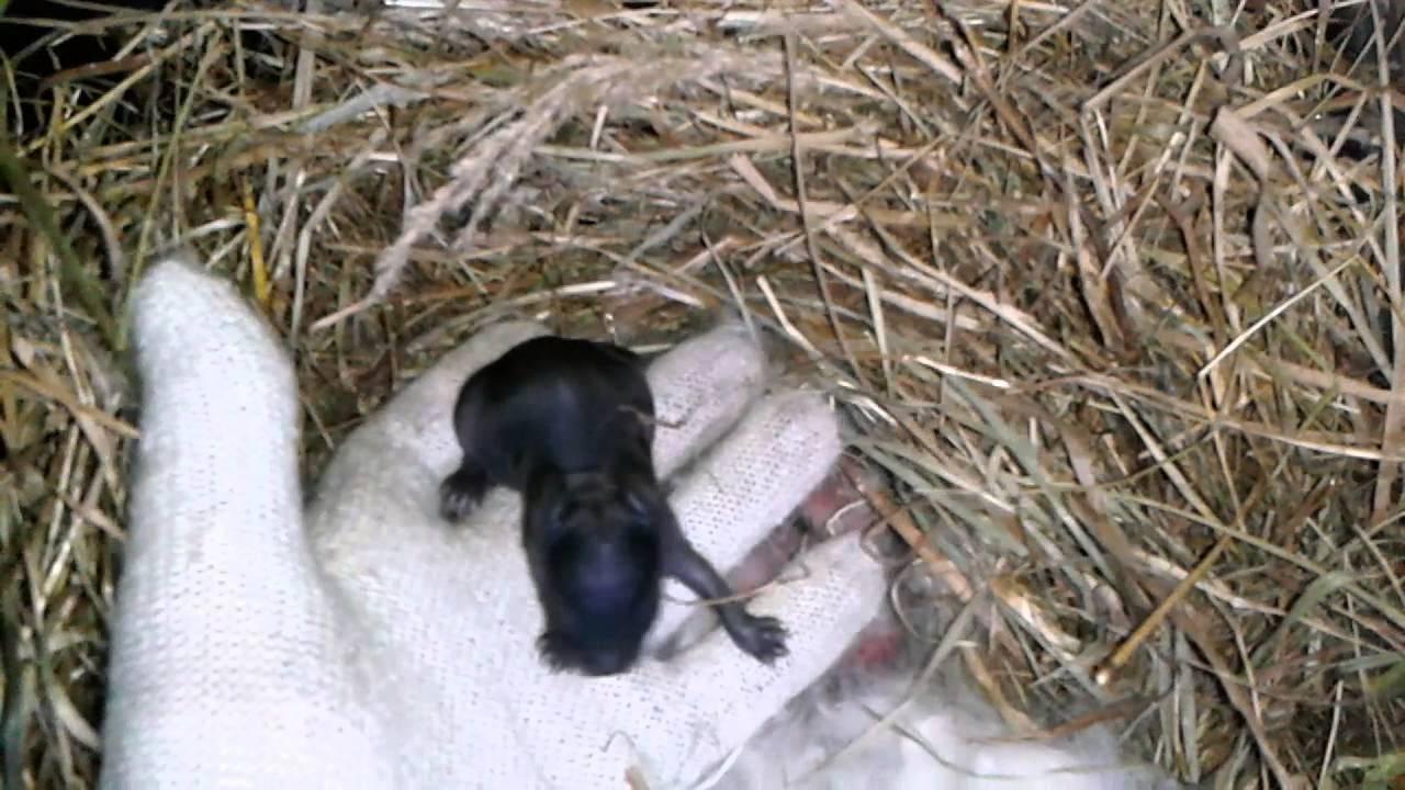 Преимущества использования комбикорма при разведении кроликов. расчет суточной потребности комбинированных кормов