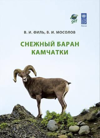Дикие горные бараны: описание, виды, ареал обитания