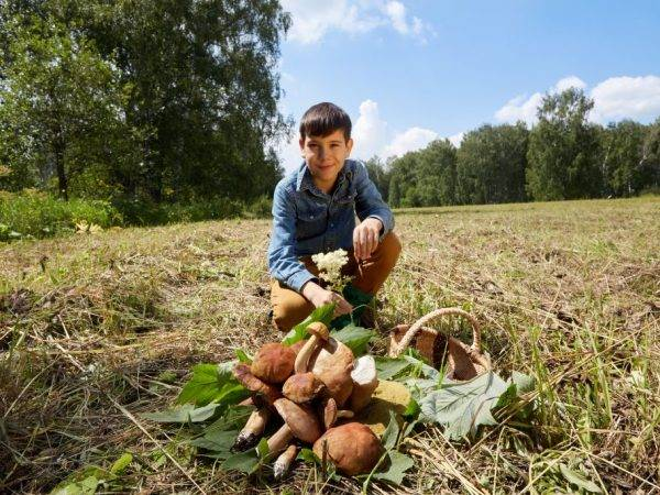 Как яды, радиация и соли тяжелых металлов превращают грибы в отраву // нтв.ru