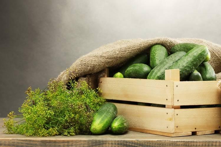 Как сохранить свежие огурцы в холодильнике подольше — сроки и способы