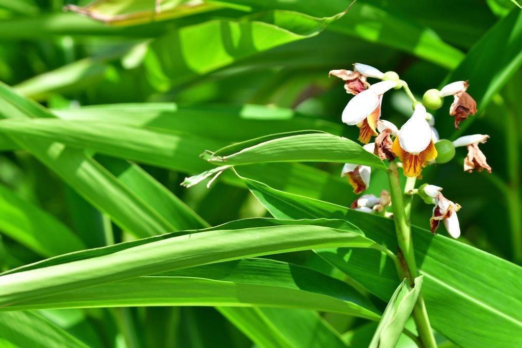У орхидеи вянут листья: что делать если они стали мягкими, причины, как спаси фаленопсис