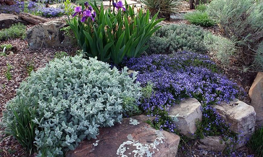 Все о многолетнем садовом молочае: как вырастить, размножить, посадка и уход в саду
