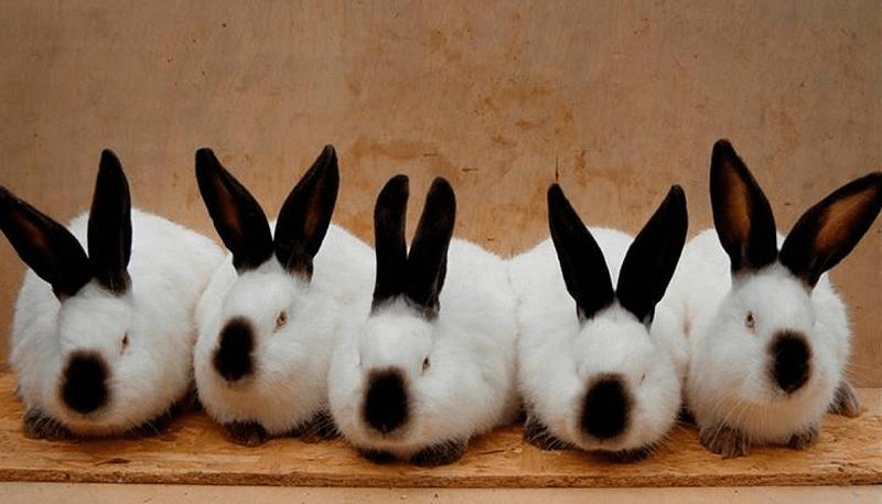 Бизнес план разведение кроликов: как начать получать прибыль