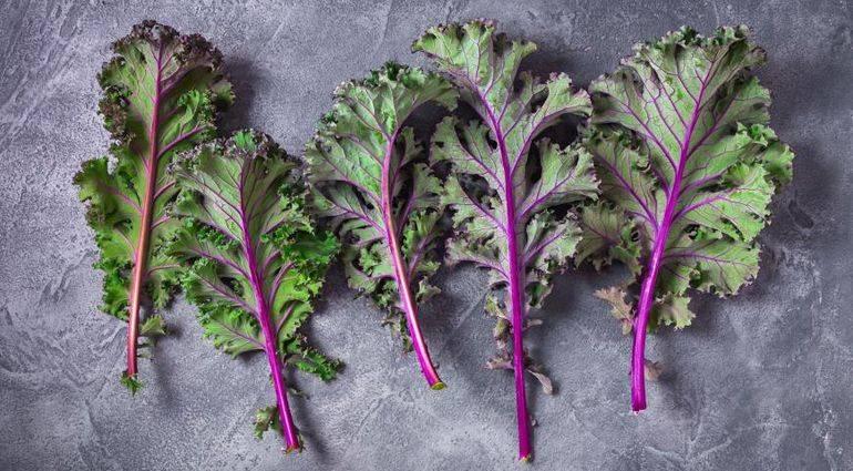 У высаженной рассады капусты листья и стебель посинели, стали фиолетовыми: в чем причина, чего не хватает, что делать, чем подкормить капусту?