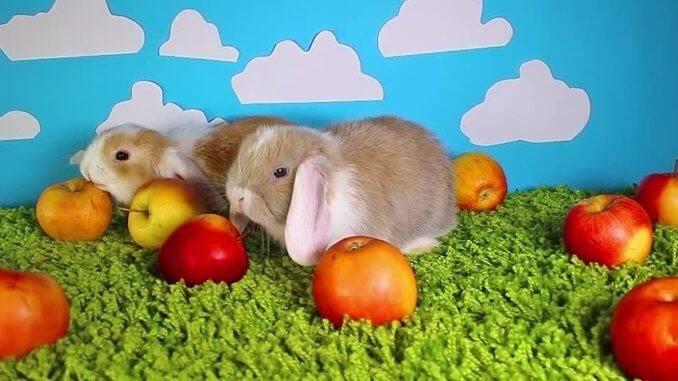 Можно ли давать кроликам петрушку?