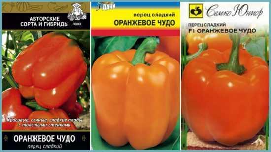 Перец оранжевое чудо — описание сорта, фото, отзывы, посадка и уход