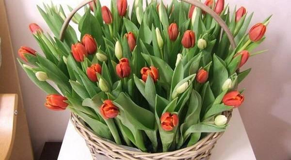 Условия и способы хранения тюльпанов дома
