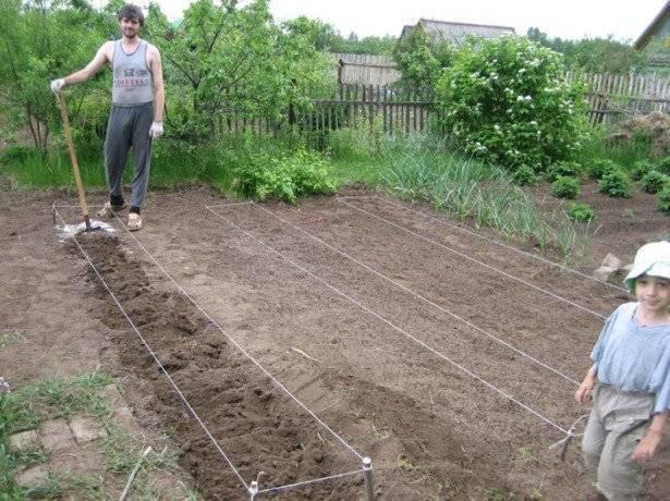 Посадка картофеля по методу митлайдера: правила посадки и ухода, преимущества метода, технология, отзывы