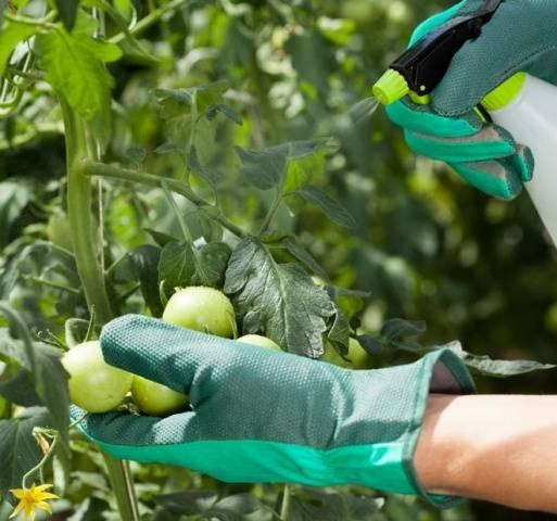Тиовит джет: инструкция по применению для винограда, правила обработки, срок ожидания