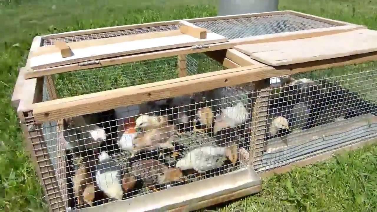Брудер для цыплят своими руками – чертежи, фото и видео. инструкция, как сделать.