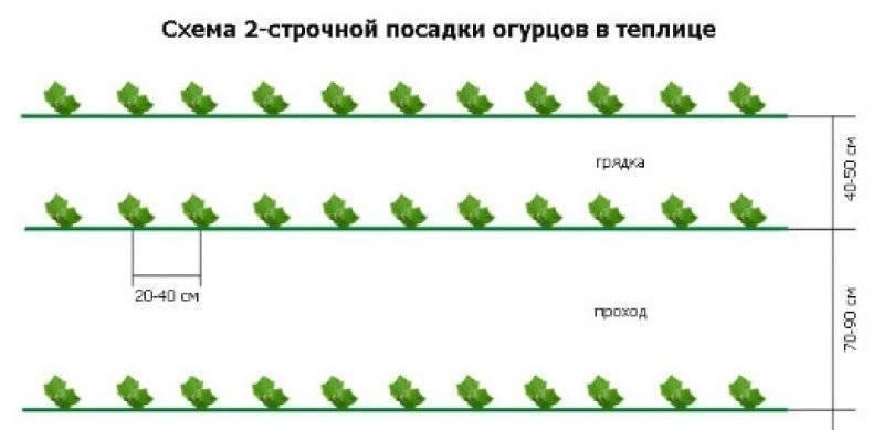 Выращивание кабачков и уход за ними русский фермер