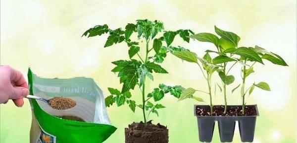 Чем подкормить рассаду помидор и перца в апреле 2019 года: урожайные советы по выбору режима удобрения саженцев | спутниковые технологии
