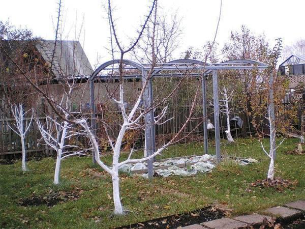 Обработка яблонь: советы как правильно опрыскивать и особенности лечения основных болезней яблони