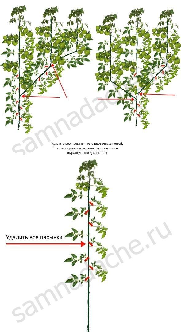Как правильно пасынковать помидоры: фото и пошаговая инструкция