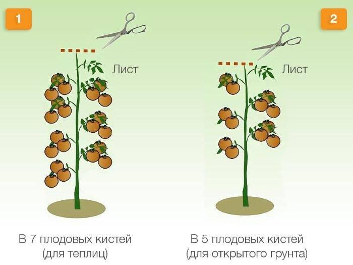 Прищипывание томатов: принцип и правила удаление пасынков