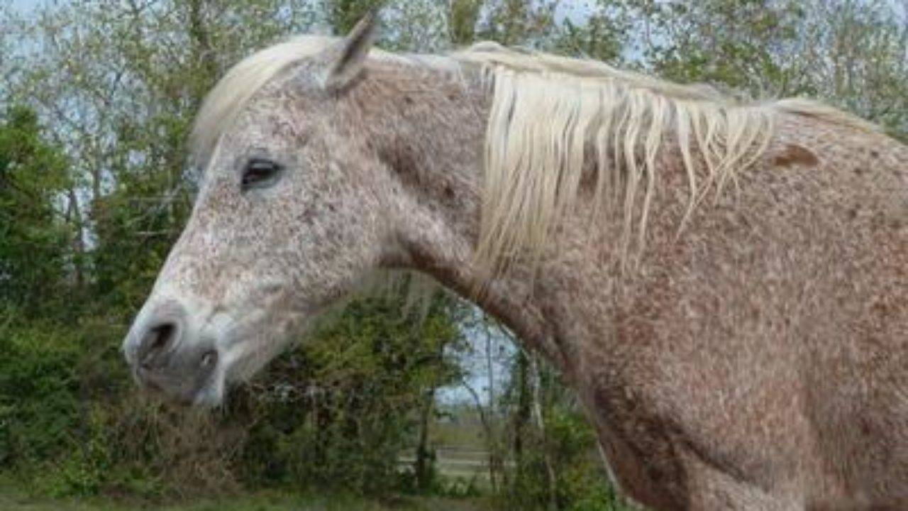 Сколько живут лошади и как определить их возраст | мои лошадки