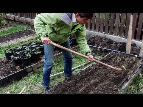 Основные правила посадки моркови под зиму: фото + видео