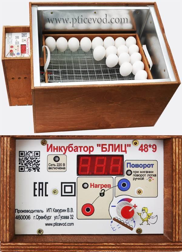Зарождение жизни в яйце или как проходит инкубация