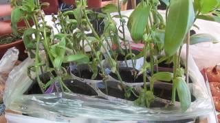 Паутинный клещ на рассаде, как вывести: симптомы, народные средства, химия, биологические средства