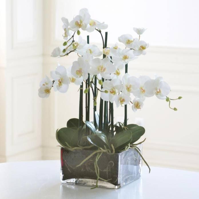 Приручаем апофеоз природной хрупкости и изящества: всё о содержании белых орхидей фаленопсис в домашних условиях