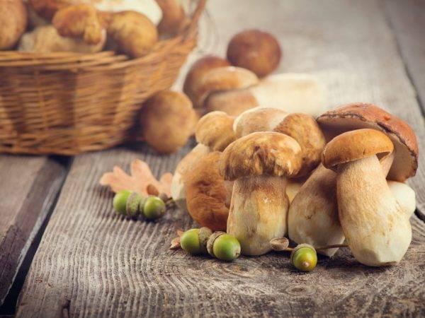 Виды грибов в Гомельской области
