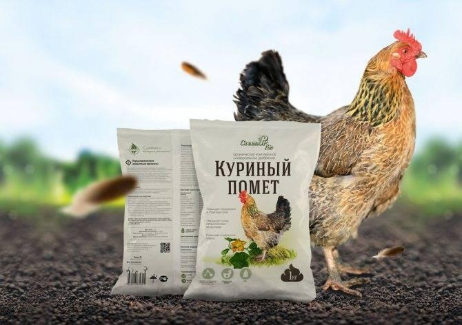 Удобрение куриным пометом: формы и правила внесения, какие растения можно подкармливать