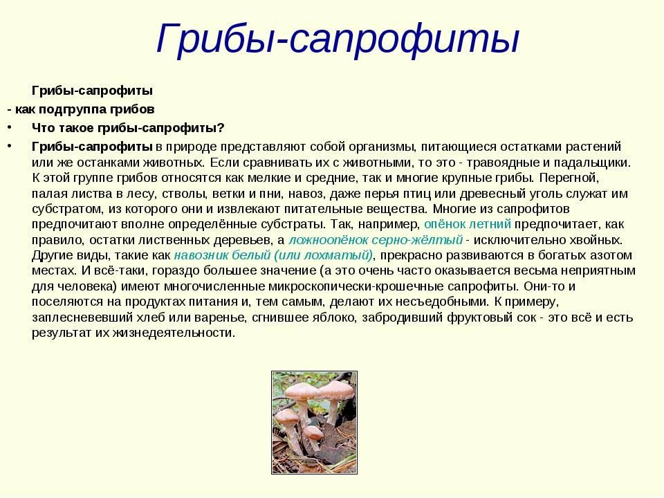 Сапрофиты - это... грибы-сапрофиты