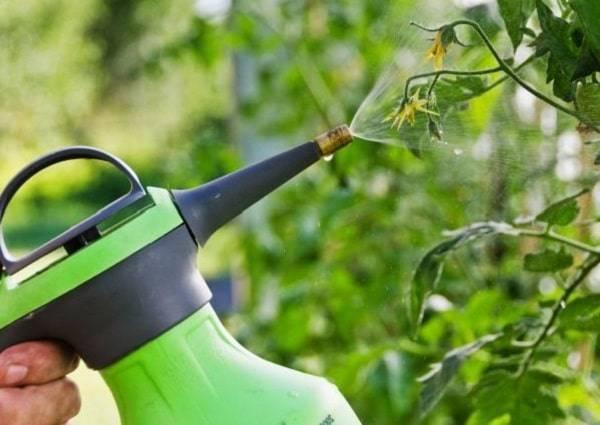 Подкормка помидоров в открытом грунте: советы эксперта