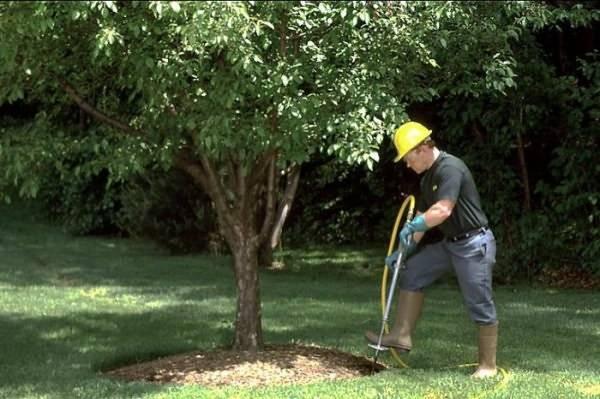 Подкормка яблони - схема внесения удобрений, чем подкормить яблоню