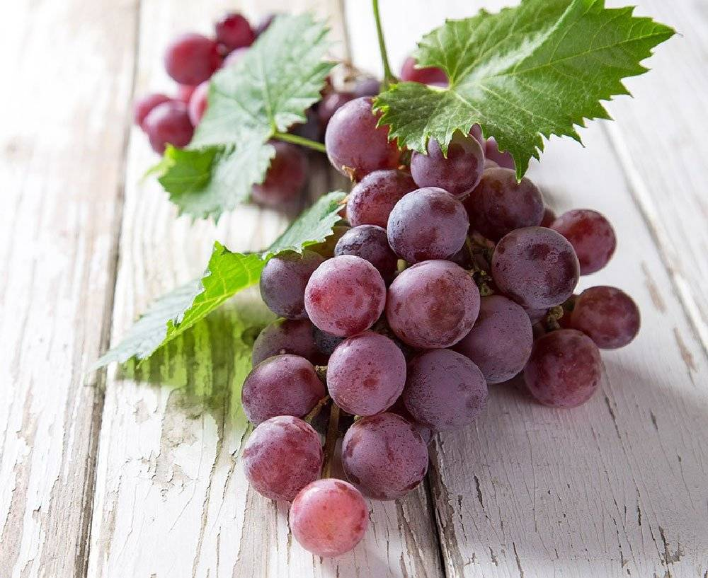 """Виноград """"ягуар"""": описание сорта, фото, отзывы"""