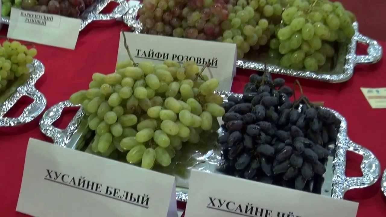 Виноград дамские пальчики: описание и характеристики сорта, посадка и уход