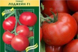 Самые урожайные сорта томатов для открытого грунта: описание и преимущества – все о томатах. выращивание томатов. сорта и рассада.