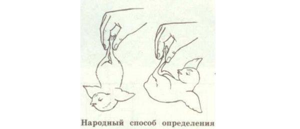 Как отличить гусака от гусыни по строению, внешности и поведению?