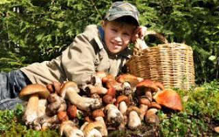 Съедобные грибы подмосковья: фото и название грибов, которые сейчас можно собирать в лесу