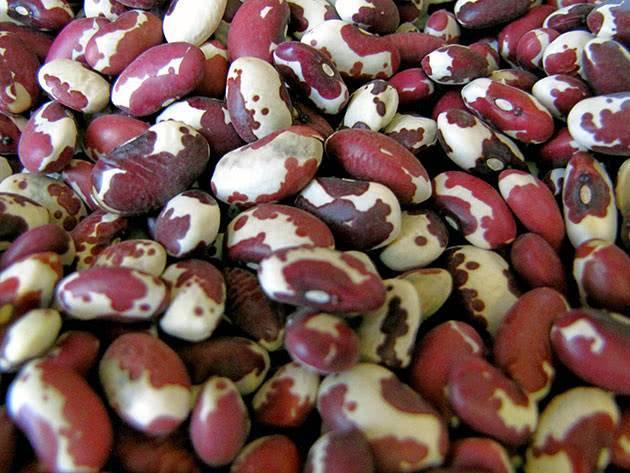 Поэтапное выращивание фасоли в домашних условиях