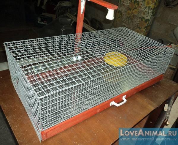 Клетки для кур-несушек: размеры, выбор, изготовление и размещение