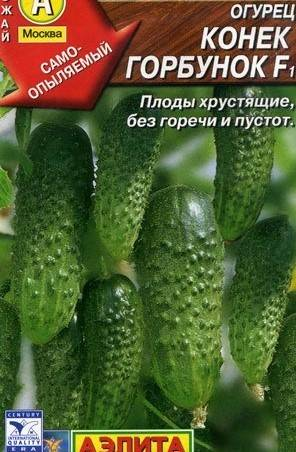 Характеристика сорта огурцов конек горбунок