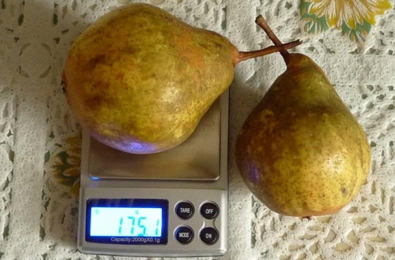 Сорта груш с фото названием и описанием груша русская красавица любимица клаппа сорт завея