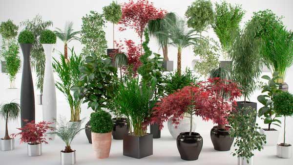 Тенелюбивые комнатные растения и теневыносливые цветы