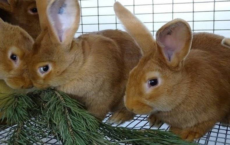 Корм для кроликов: гранулированный, без зерновой, своими руками