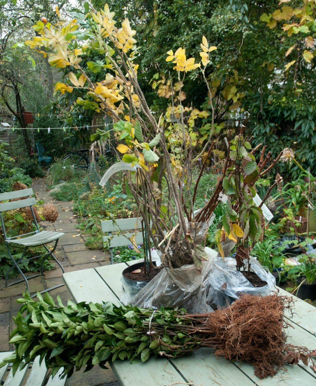 Как и когда посадить малину осенью: подробный план работ