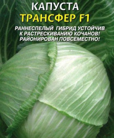 Капуста трансфер f1: описание сорта, отзывы, урожайность, фото