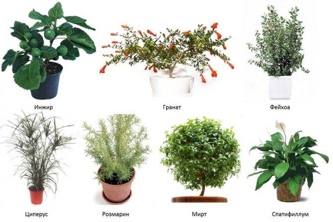 Комнатные растения, которые любят тень: фото и названия теневыносливых цветов для дома