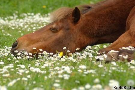 Как правильно подбирать клички для лошадей